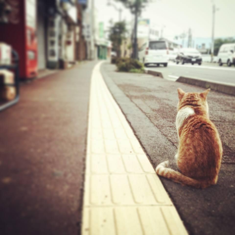松本駅より徒歩3分の八百屋さんではたらく猫を見つけた話